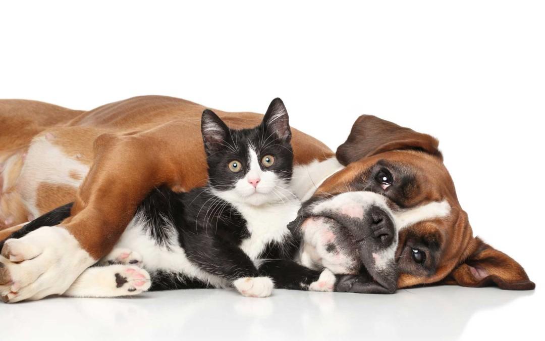 Hund und Katze liegen auf dem Boden