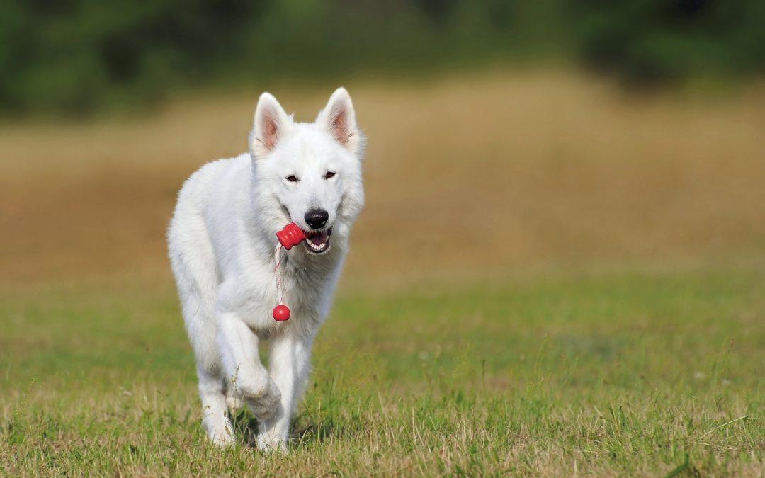 Abnahme des Nachweis der Sachkunde von Hundehalterinnen / Hundehaltern